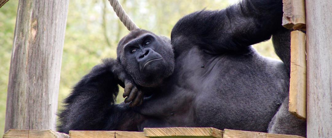 Live-Streams – Von Zuhause Tiere in aller Welt sehen