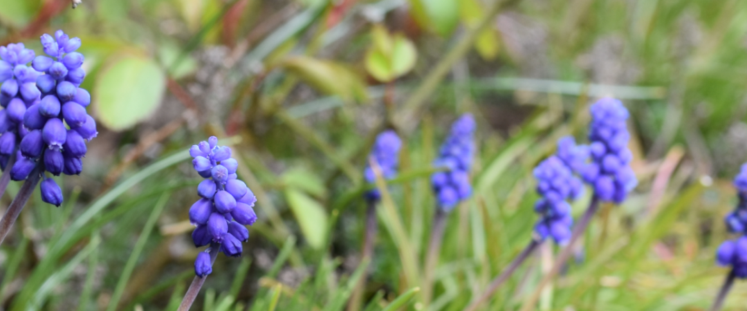 Pflanzentipp zum Ostermontag
